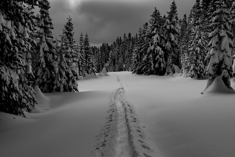 endless winter an olympians journal